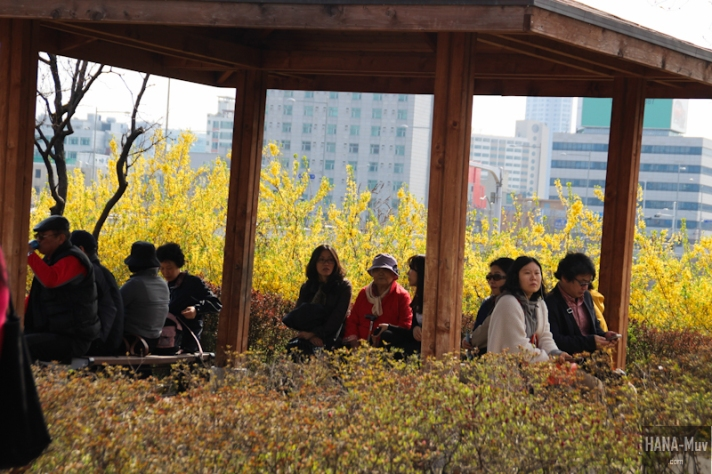 Yeouido Park Cherry Blossom - HANA-Muv.com Photo-3-2