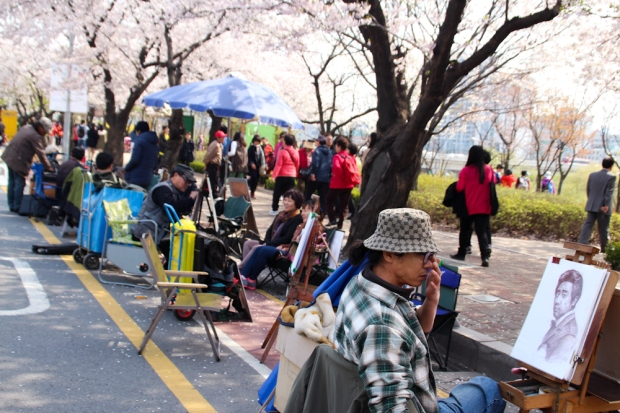Seul parques cerezos cherry blossom (1)