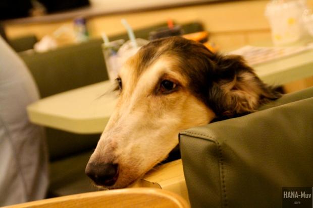 바우하우스 Bau House Dog Cafe Seoul - HANA-Muv.com Photography-3