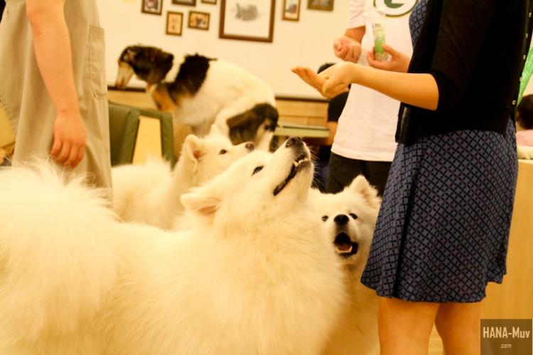 바우하우스 Bau House Dog Cafe Seoul - HANA-Muv.com Photography-6