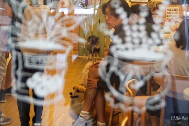 바우하우스 Bau House Dog Cafe Seoul - HANA-Muv.com Photography-7