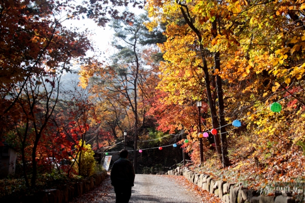 1311 FALL AUTUMN SEOUL - HANA-Muv photography-9749