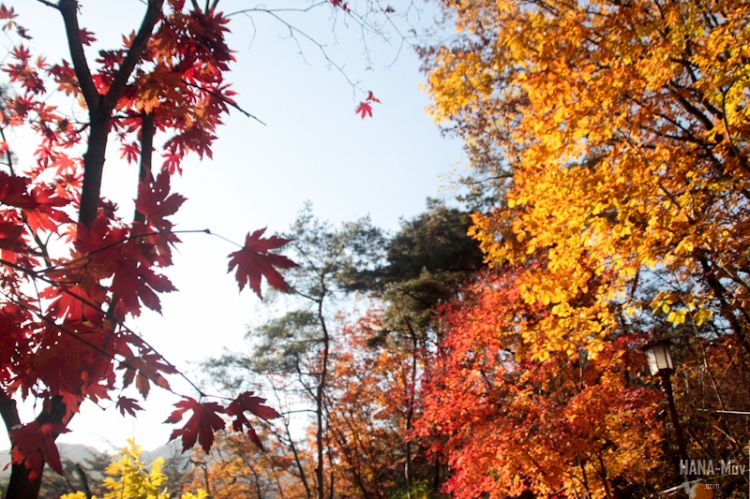 1311 FALL AUTUMN SEOUL - HANA-Muv photography-9756