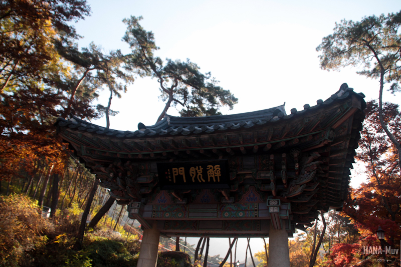 1311 FALL AUTUMN SEOUL - HANA-Muv photography-9777