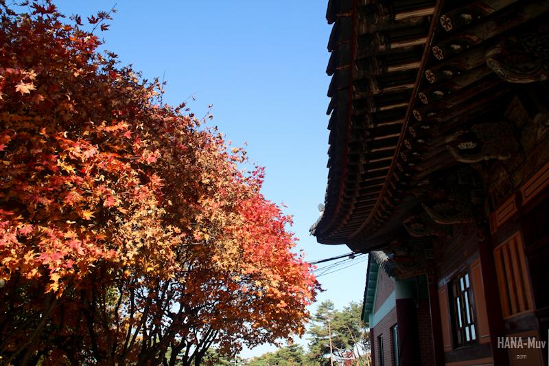 1311 FALL AUTUMN SEOUL - HANA-Muv photography-9783