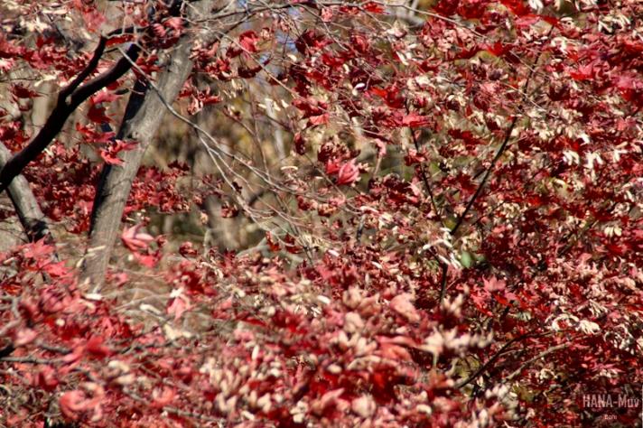 1311 FALL AUTUMN SEOUL - HANA-Muv photography-9946