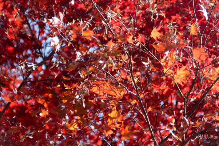 FALL seoul hana-muv photography-9817